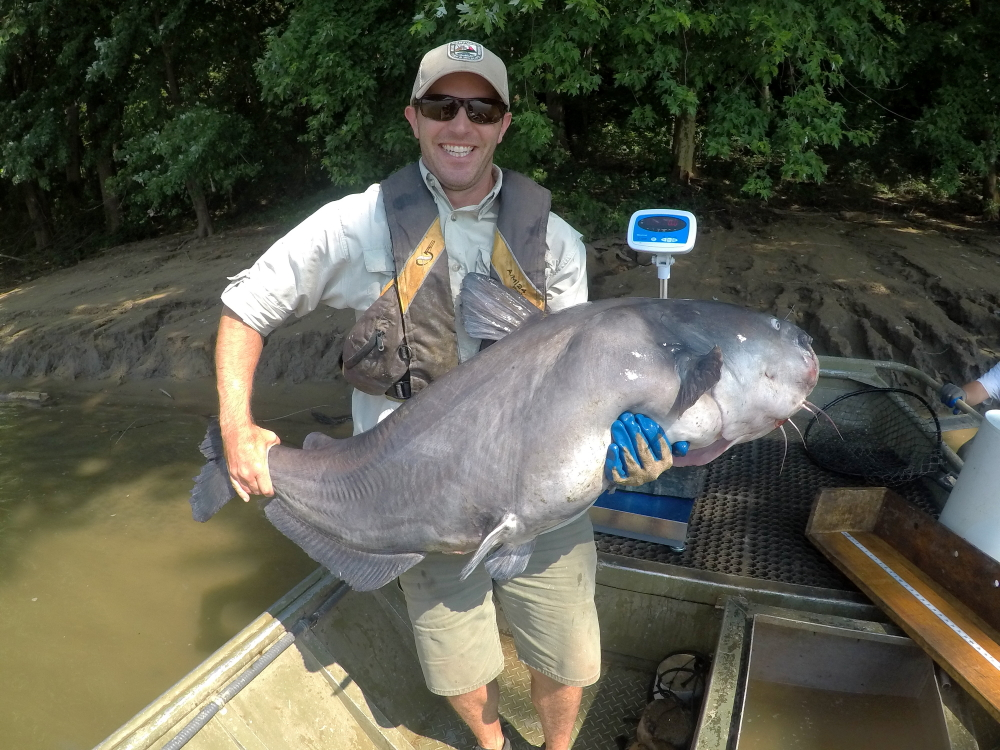 Kentucky Fish And Wildlife Commission Recommends New Catfish